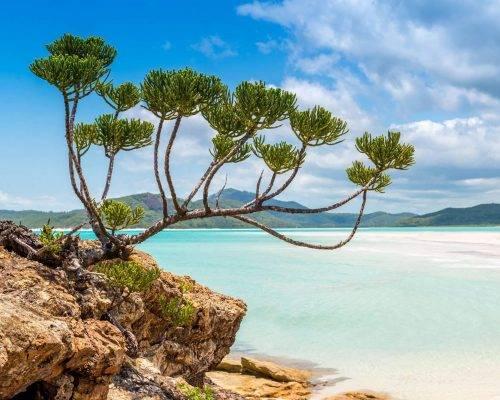 airlie-beach-whitsundays-tourism-activities (27)